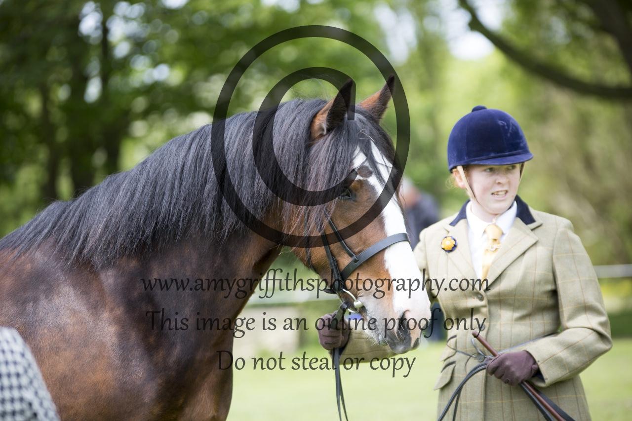 Class 16: Inhand Horse