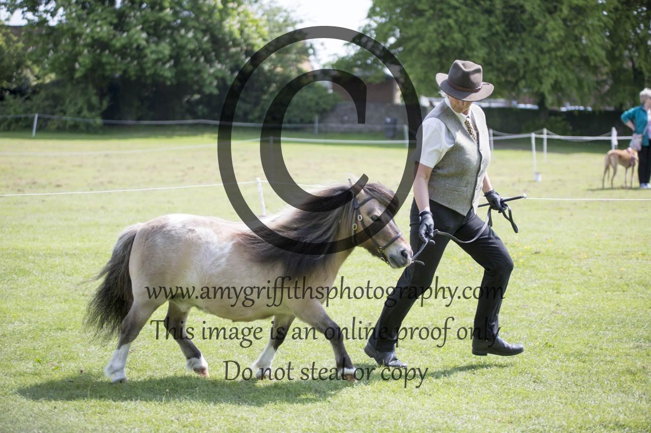 Class 22: Inhand Gelding/Stallion