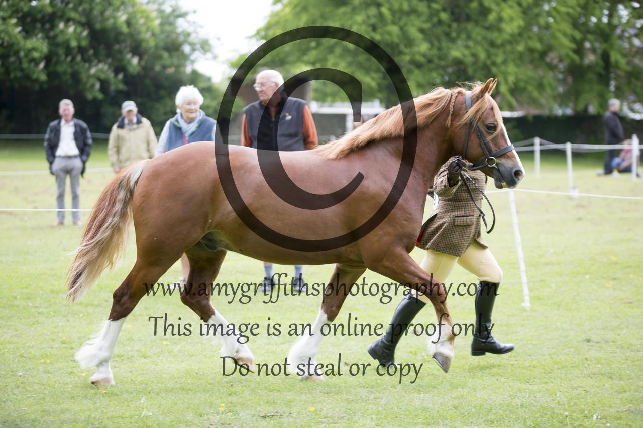 Class 15: Inhand Pony