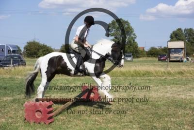 Class 16: Pleasure Horse or Pony