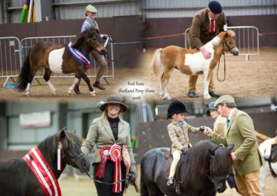Red Rose Shetland Pony Show 2018