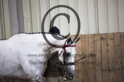 Class 67: Hack/Riding Horse/Hunter