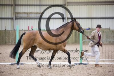 Inhand Light Horse Championship