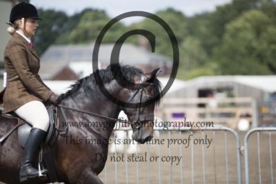 Class 41: Ridden Novice horse or pony