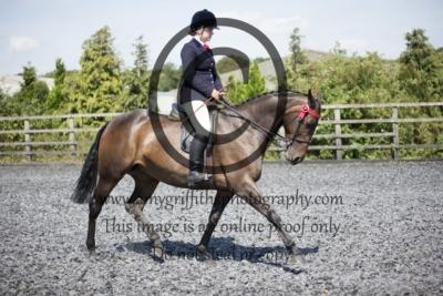 Class 51: Show Pony/Horse 15hh+