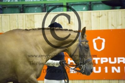 Class 3: Sports Horse Type