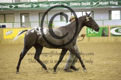 Class 11: 2/3 Year Old Filly
