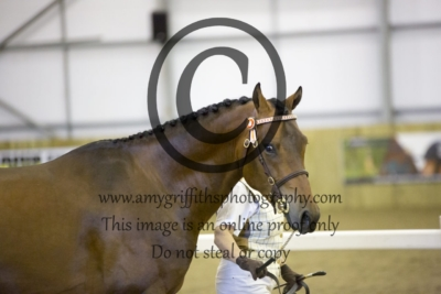 Class 18: BApS Licensed Stallions