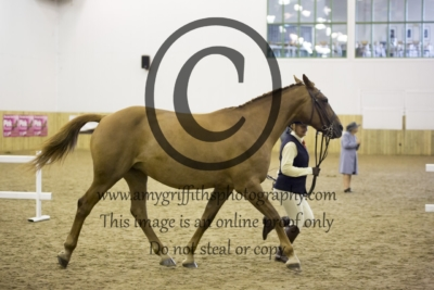 Class 20: Part bred Mares 4+