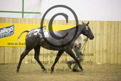 Main/Annex Registered Youngstock Championship