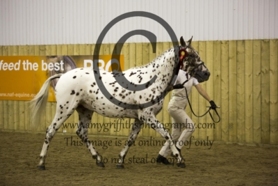 Part bred Male Championship