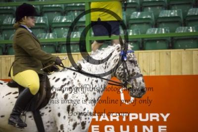 Class 31: Open Ridden Horse (Part Bred)