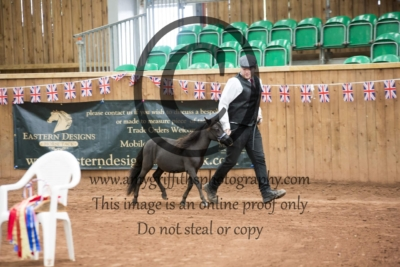 Class 124: Yearling Partbred Falabella