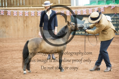 Class 125: 2 & 3 Year Old Partbred Falabella