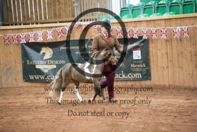 Class 126: 4 Years + Partbred Falabella