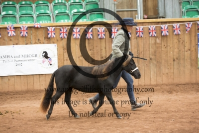 Class 140: Yearling Filly or Gelding