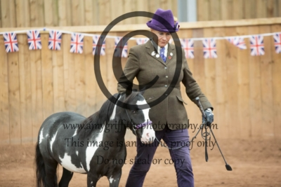 Class 142: 2 & 3 Year Old Filly or Gelding
