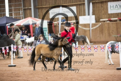 Class 144: 4 Years + Mare or Gelding