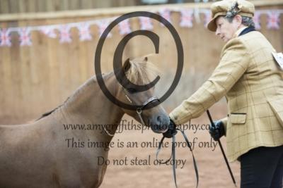 Class 145: 4 Years + Stallion