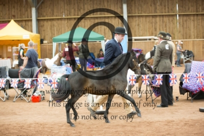 Class 154: Scaled Down Show Riding Horse