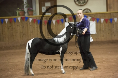 Grand Championship Category B Refined Horse of 2018