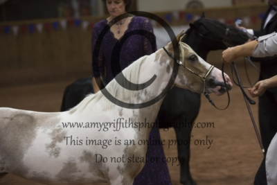 Grand Champion Category B Middleweight Horse of 2018