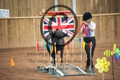 Class 7: Novice Halter Obstacle