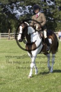Class 88: Leisure Horse