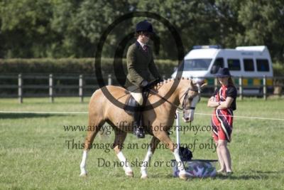 Class 92: Potential Dressage Pony