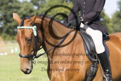 Class 93: Potential Dressage Horse