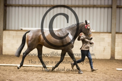 Class 19: Riding Horse/ Hack