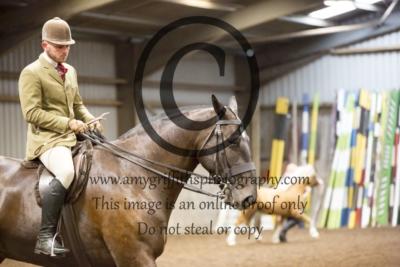 Class 31: Show Cobs & Heavy Horses