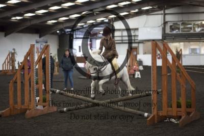 Class 57: Novice Pony