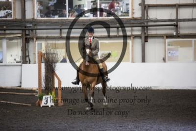 Class 60: Open Horse