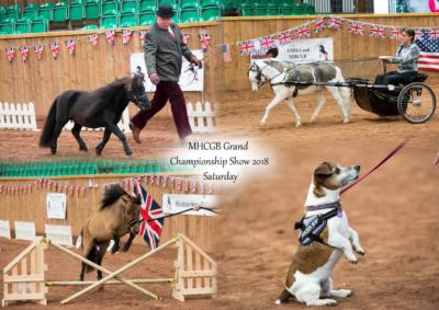 Miniature Horse Club Great Britain 2018
