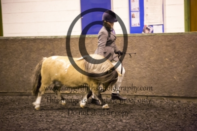 Class 5: In Hand Pony