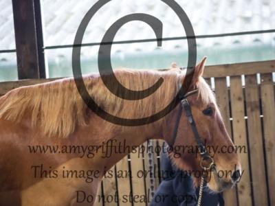Class 4 – Inhand Horse