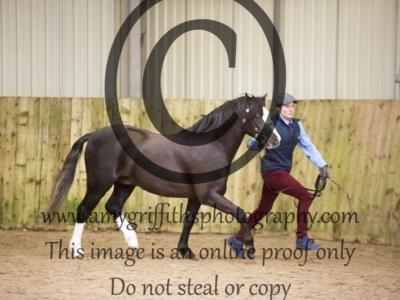 Class 13 – Stallion