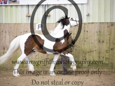 Class 17 – 2 & 3 year old Colt