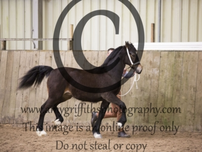 Class 30 – Yearling Filly