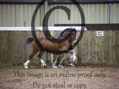 Class 31 – 2 or 3 year old Colt