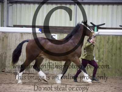 Class 32 – 2 or 3 year old Filly or Gelding