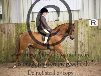 Class 36: BSPS Mixed Height Open Show Hunter Pony
