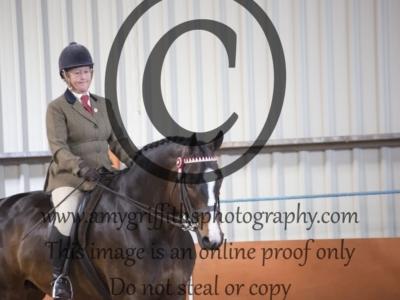 Horse Championship