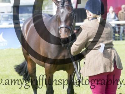 Class 6 – Inhand Show Hunter Pony