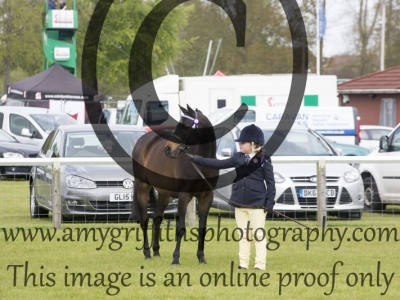 Class 10 – New Combination Ponies