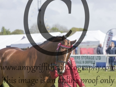Class  35 – Best Condition Horses