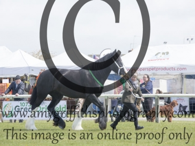 Class  36 – New Combination Horses
