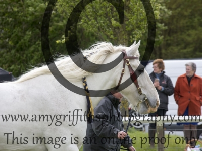 Class 41 – Heavy Horses