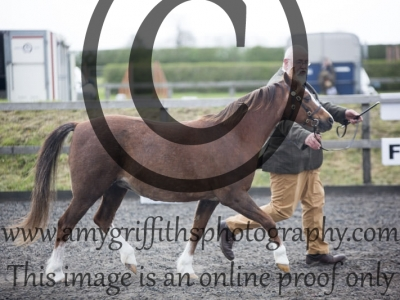 Class 90: Veteran Horse or Pony Inhand